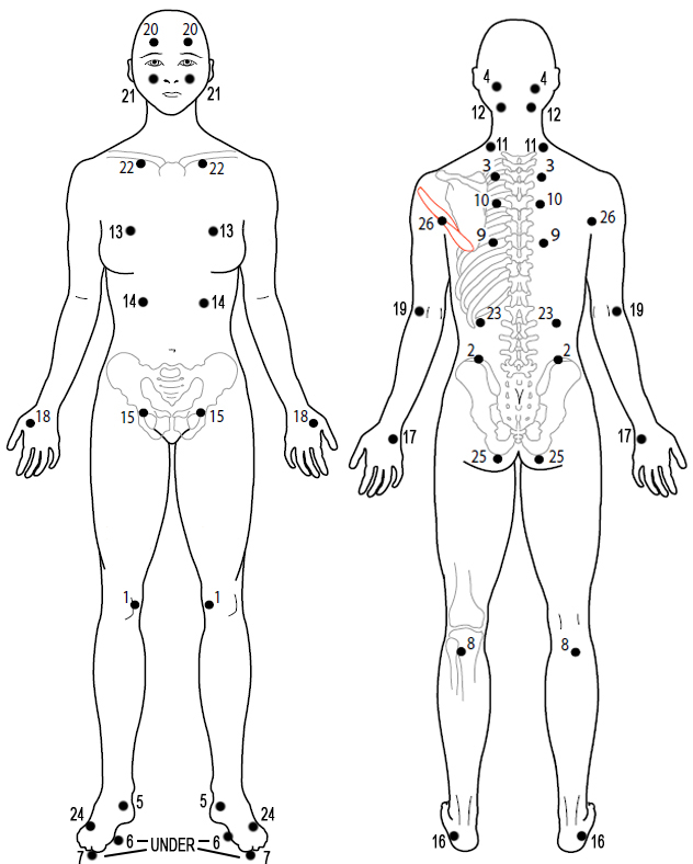 anatomical drawing points 1-26